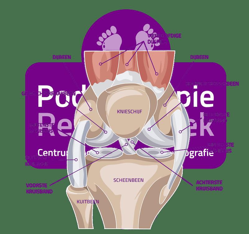 Binnenste Knieband Mediale knieband Podotherapie Reggestreek Rijssen