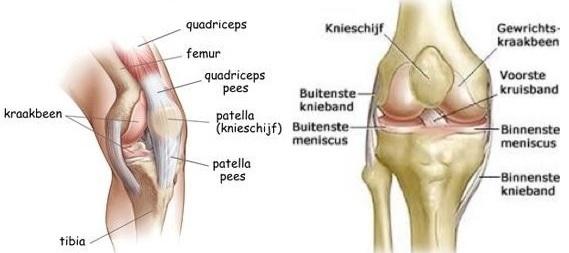Pijn knie Podotherapie Reggestreek Rijssen